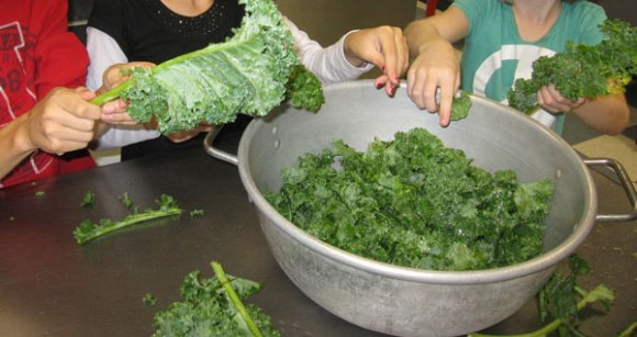 Kids are great helpers when lots of kale needs to be chopped!