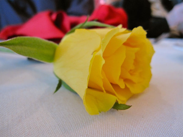 A rose from the burial