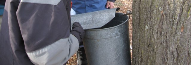 6) Any age student can help hang the sap bucket and put on the lid