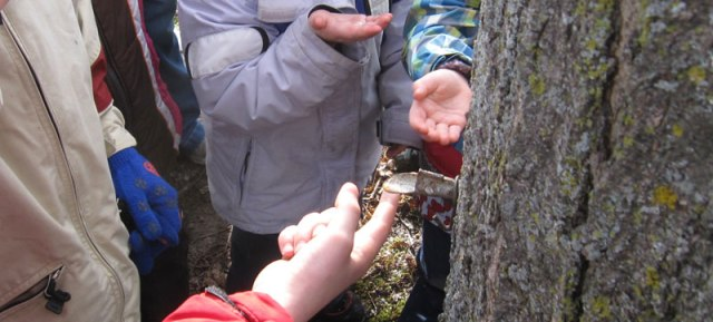 5) CRUCIAL step: Taste the maple sap!  Again, try to pick a day above freezing so this is possible