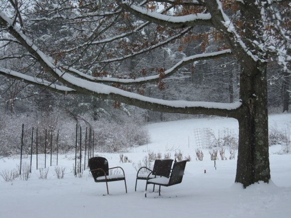 The garden in the winter and our climbing tree's hammock hanging branch