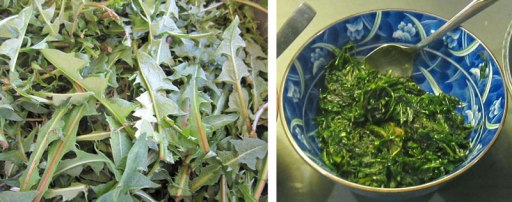 Dandelion harvest fresh and fried