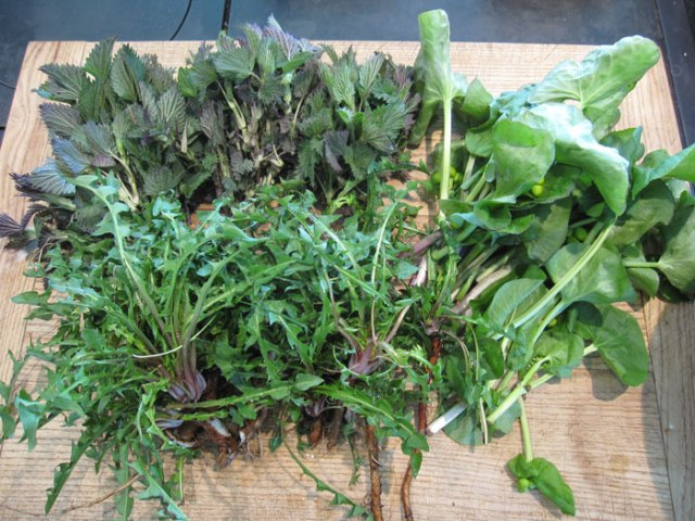 Early spring is the perfect time to forage for wild greens.  Many of the first plants to emerge from river banks, forests, and fields are edible, and they're available before anything is ready from the garden.  In addition, early shoots are often the most delectible part of plant to eat!
