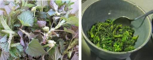 Stinging Nettles fresh (don't touch!) and cooked