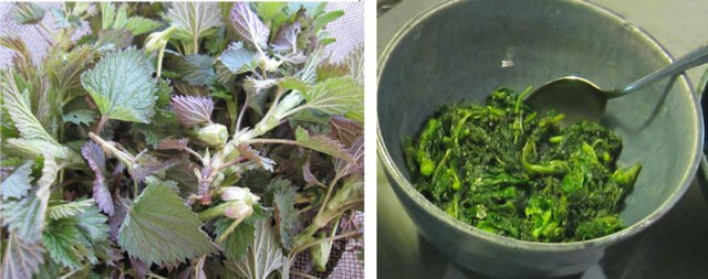 Nettles-fresh-and-cooked