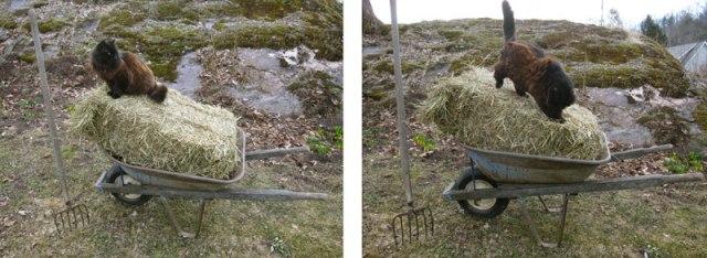 pogo-gardener