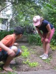garden-evaluation