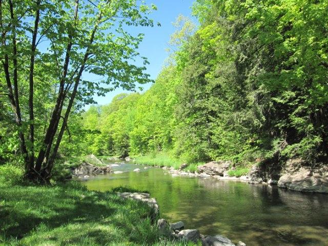lewis-creek