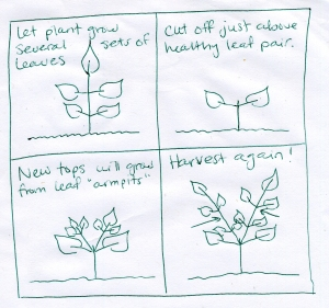 Herb Pruning Diagram