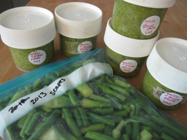 Here's the chopped bag or scapes and small containers pesto ready for the freezer!