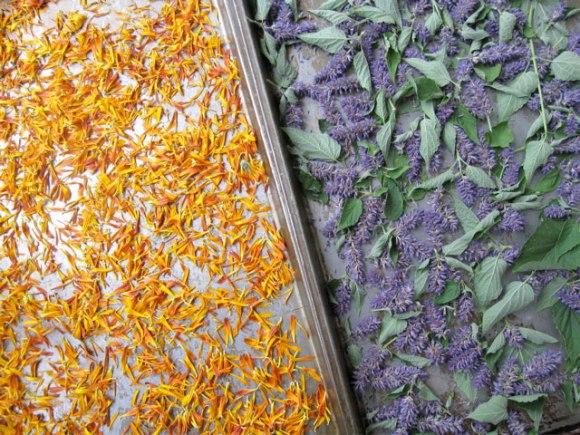 drying-petals