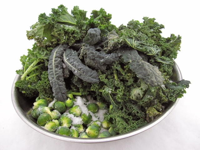 Winter-Kale-brussels-harvest