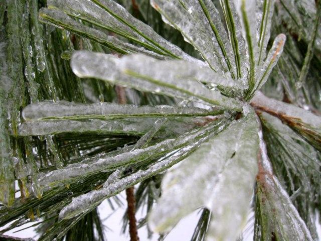 Ice-Pine