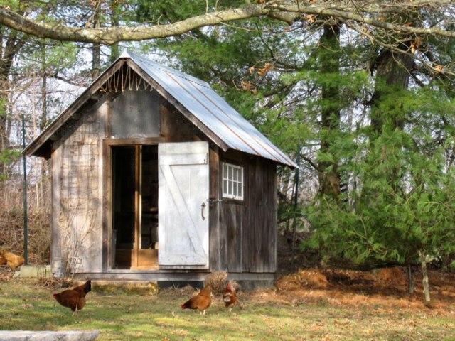 chickens-range-free