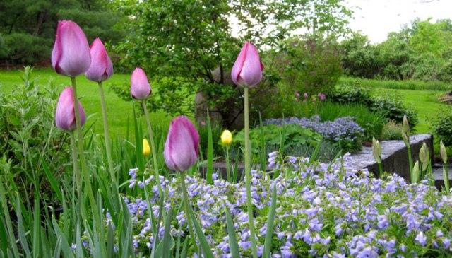 Memorial-Day-Blooms