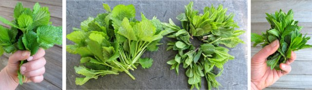 mint-lemon-balm-harvest