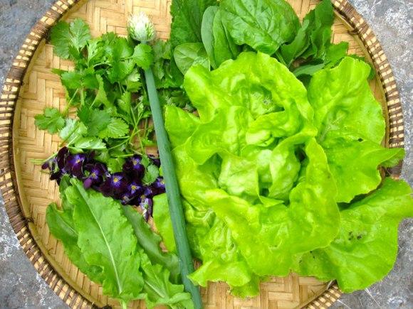 cilantro-salad