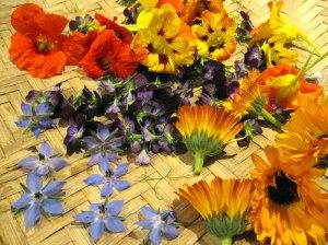 edible-flower-harvest