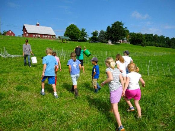 Fifth Fence Farm's newest flock