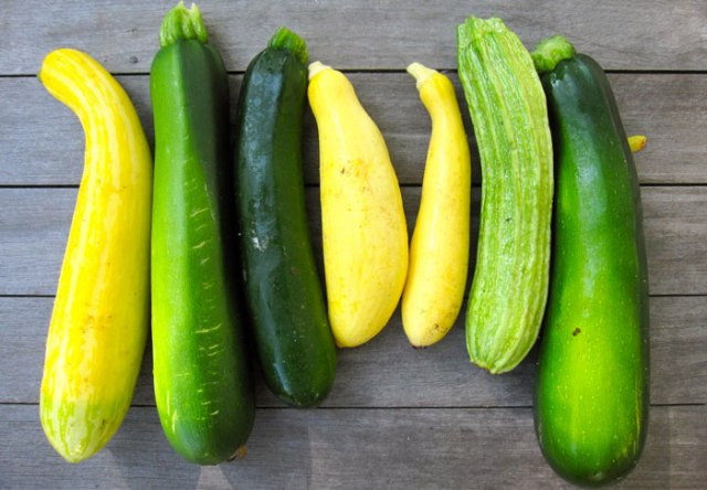 zucchini-harvest