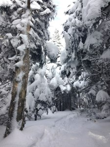 Wonderful winter hiking: the trail up Camel's Hump