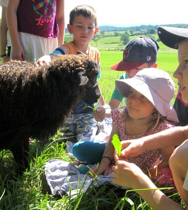 Meeting Stewart Little (the sheep)