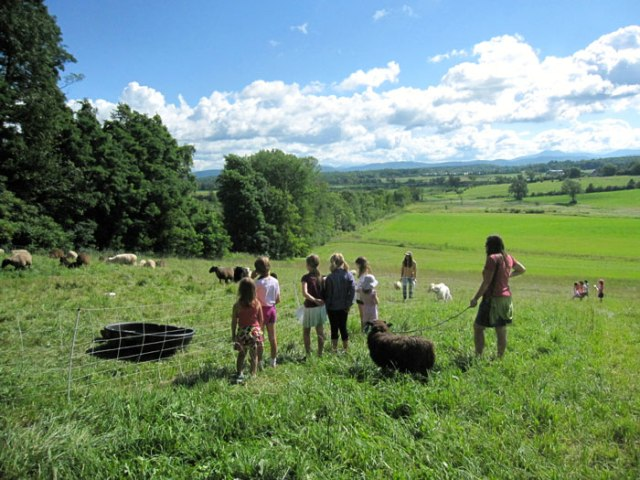 Observing Philo Ridge Farm Sheep