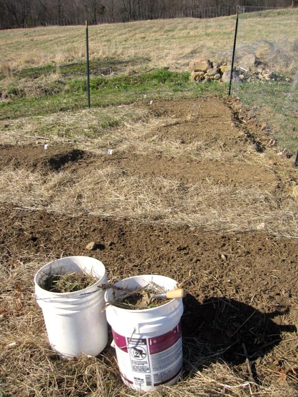 ten-gallon-harvest