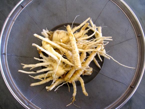 wild-parsnip-harvest