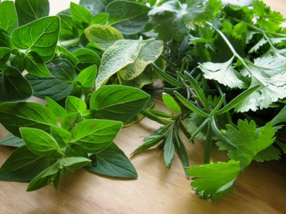 spring-herbs2