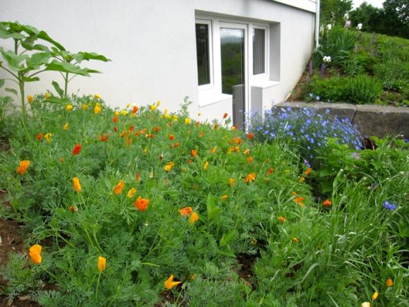 walk-out-garden
