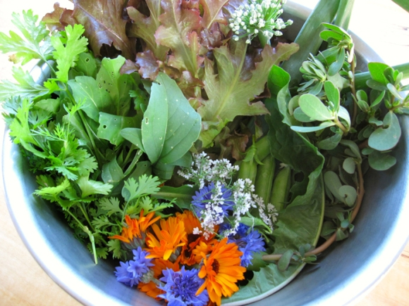 late-june-salad-harvest