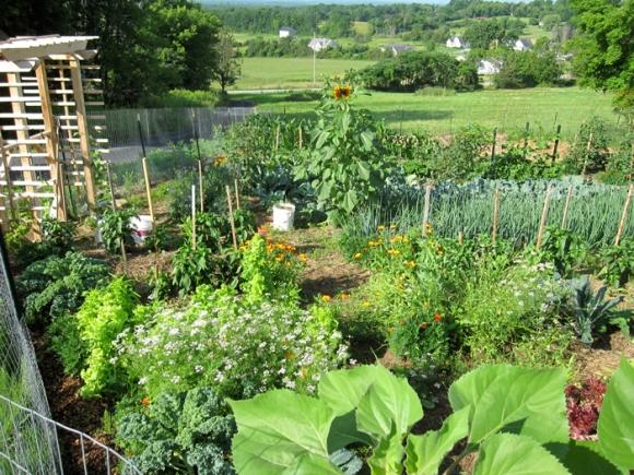 mid-july-garden