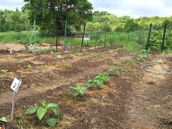 Planted Garden2