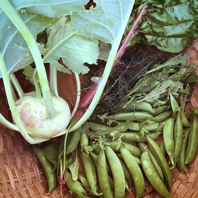 Crunchy first harvest